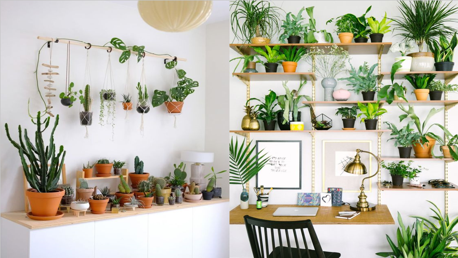how to decorate your home with plants