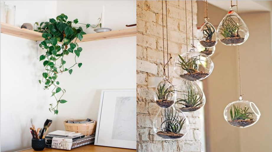 using plants to decorate a home