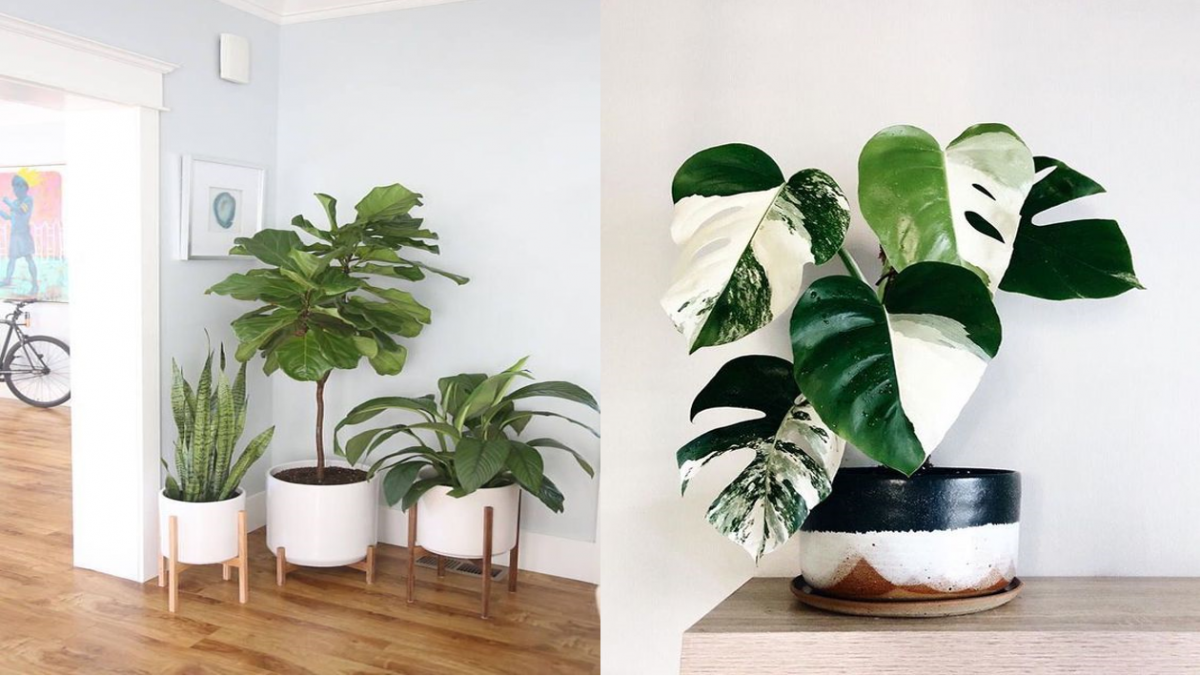 plant decoration ideas